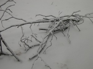 fallin limbs