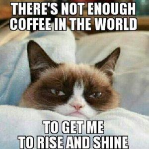 Grumpy-cat-MEME-LOL-Funny-Pictures