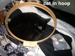Hooped cat2016